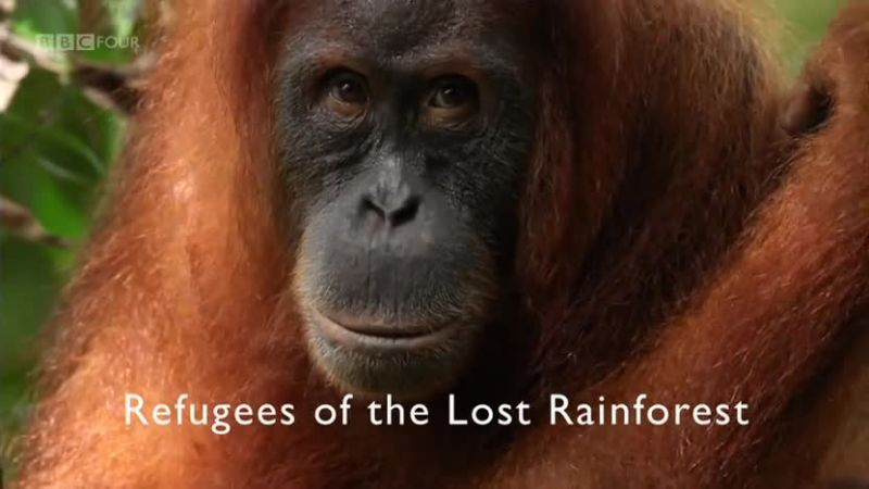 Image: Refugees-of-the-Lost-Rainforest-Cover.jpg