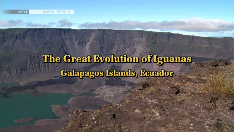 Image: The-Great-Evolution-of-Iguanas-Cover.jpg
