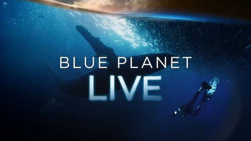 Image: Blue-Planet-Live-2019-Cover.jpg
