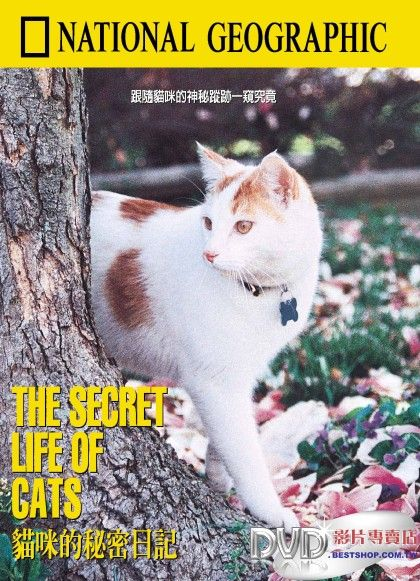 Image:Secret-Life-of-Cats-Cover.jpg