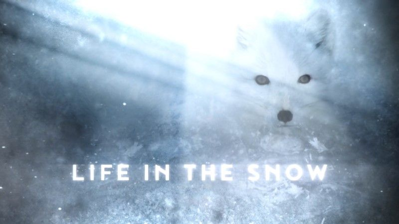 Image: Life-in-the-Snow-Cover.jpg