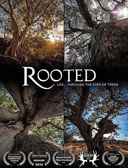 Image: Rooted-Series-1-Cover.jpg