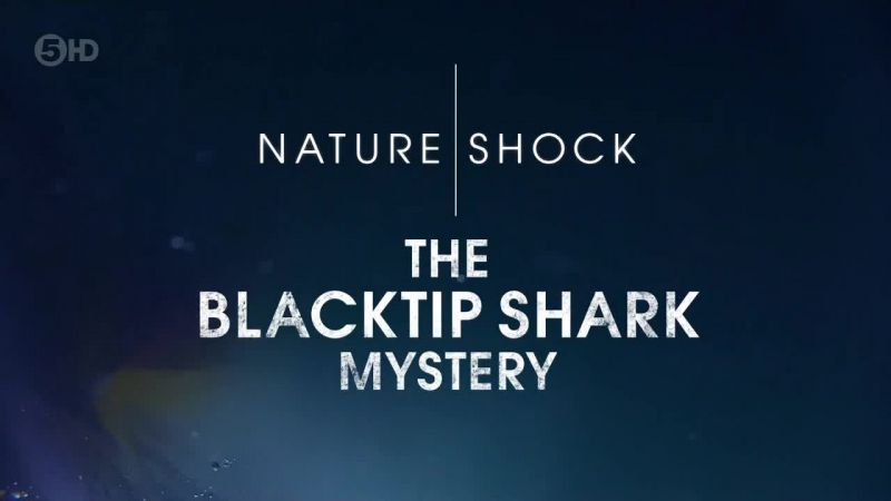 Image: The-Blacktip-Shark-Mystery-Cover.jpg