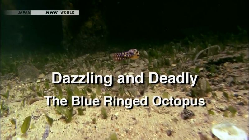 Image: Dazzling-and-Deadly-The-Blue-Ringed-Octopus-Cover.jpg
