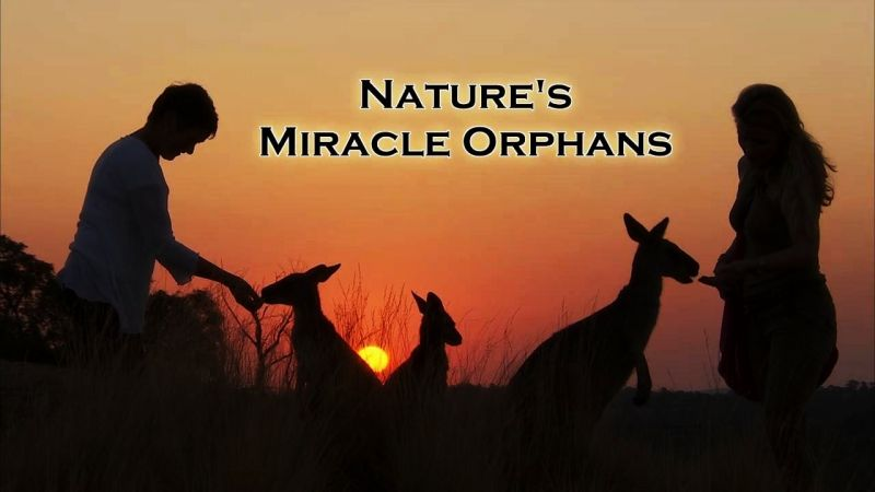 Image: Nature-s-Miracle-Orphans-Cover.jpg