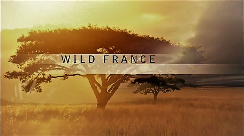 Image: Wild-France-PBS-Cover.jpg