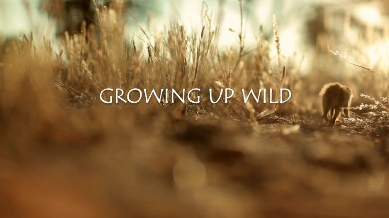 Image: Growing-Up-Wild-BBC-Cover.jpg