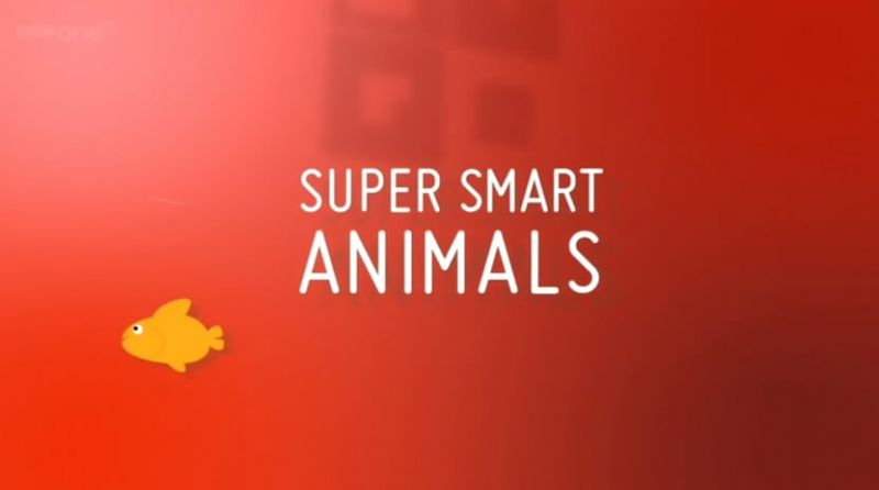 Image: Super-Smart-Animals-Cover.jpg