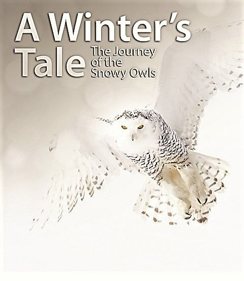 Image: A-Winter-s-Tale-The-Journey-of-the-Snowy-Owls-Cover.jpg