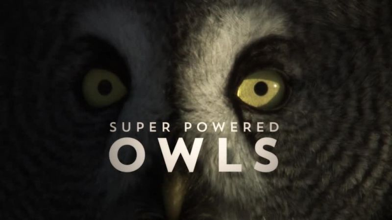 Image: Super-Powered-Owls-Cover.jpg