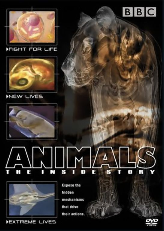 Image: Animals-The-Inside-Story-Cover.jpg