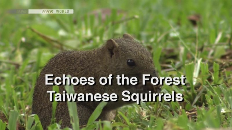 Image: Echoes-of-the-Forest-Taiwanese-Squirrels-Cover.jpg