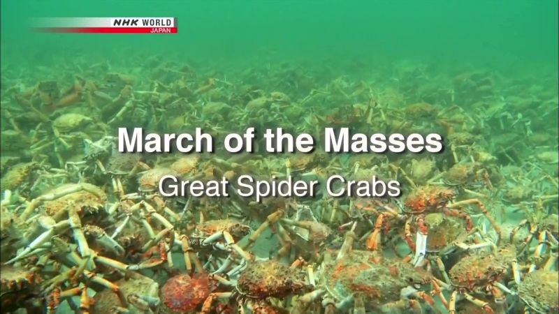 Image: March-of-the-Masses-Great-Spider-Crabs-Cover.jpg