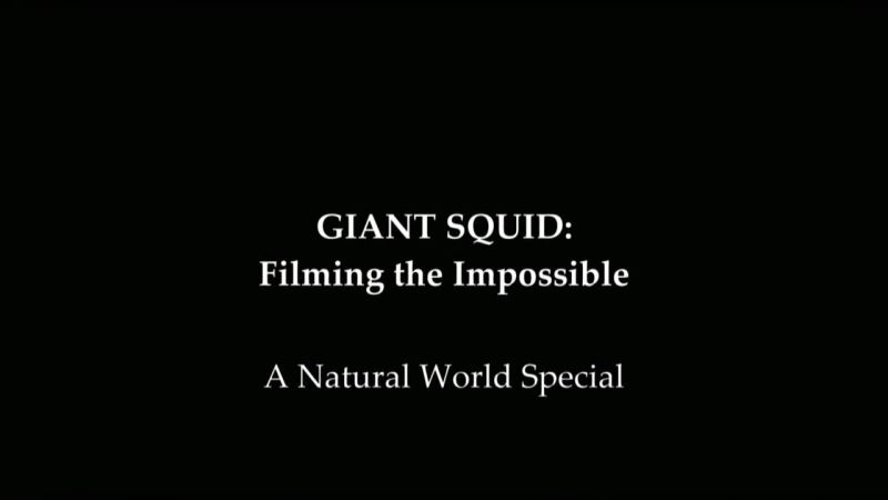 Image: Giant-Squid-Filming-the-Impossible-Cover.jpg