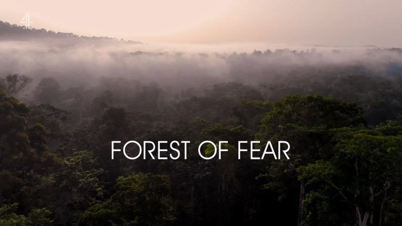 Image: Forest-of-Fear-Cover.jpg
