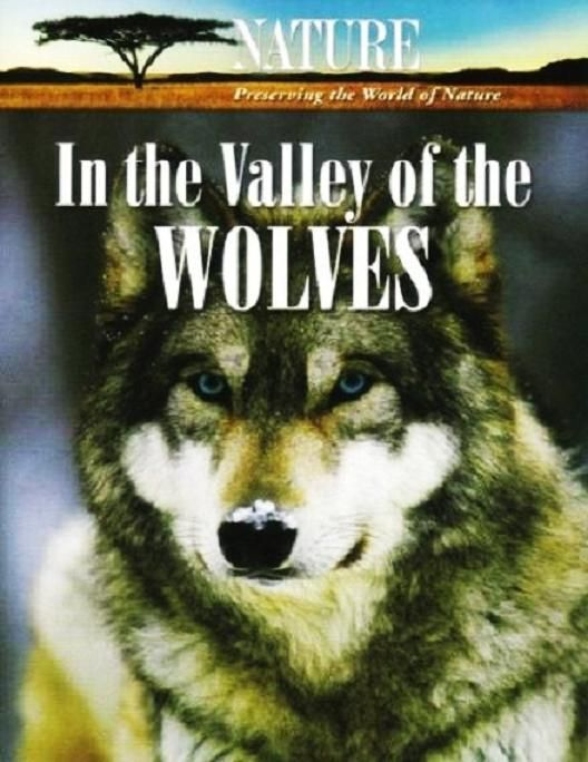 Image: In-the-Valley-of-the-Wolves-HDTV-Cover.jpg