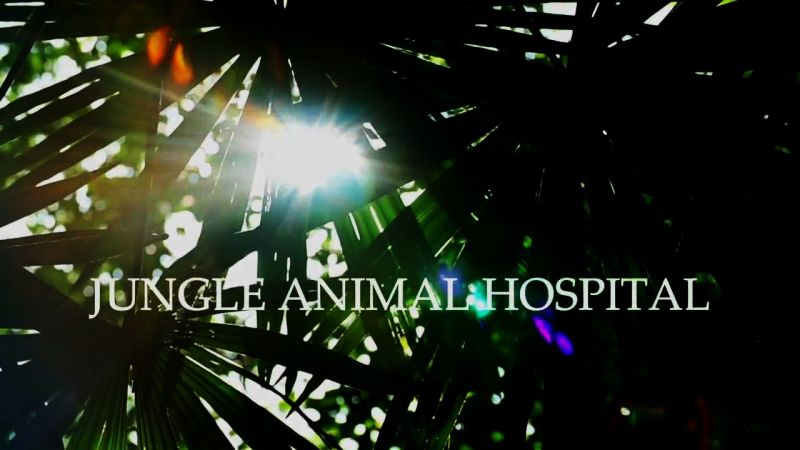 Image: Jungle-Animal-Hospital-Cover.jpg