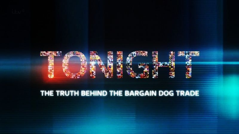 Image: The-Truth-Behind-the-Bargain-Dog-Trade-Cover.jpg