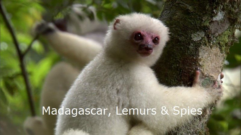 Image: Madagascar-Lemurs-and-Spies-BBC-1080p-Cover.jpg