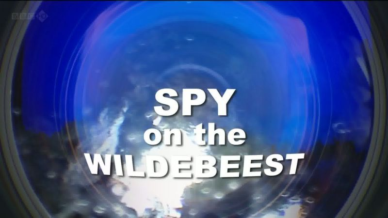 Image: Spy-On-The-Wildebeest-BBC-Cover.jpg