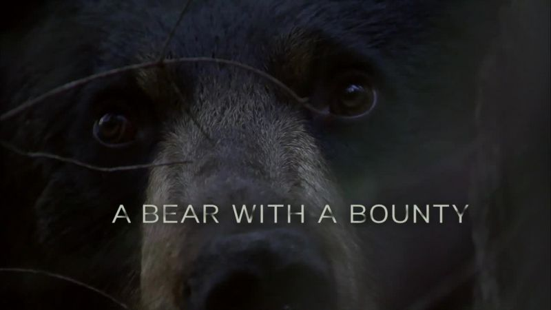 Image: A-Bear-with-a-Bounty-Cover.jpg