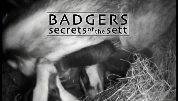 Image: Badgers-Secrets-of-the-Sett-Cover.jpg