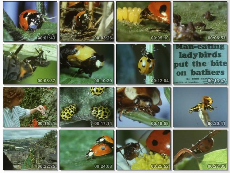 Image: Ladybird-Screen0.jpg