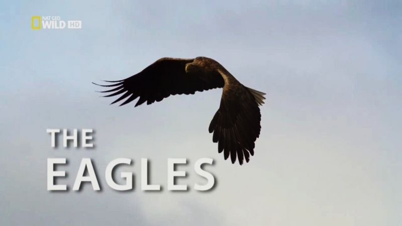 Image: Destination-Wild-The-Eagles-Cover.jpg