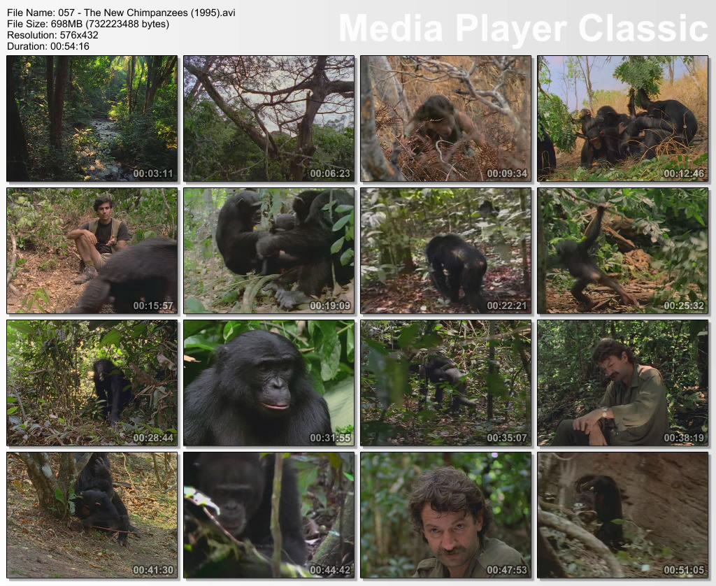 Image: The-New-Chimpanzees-Screen0.jpg