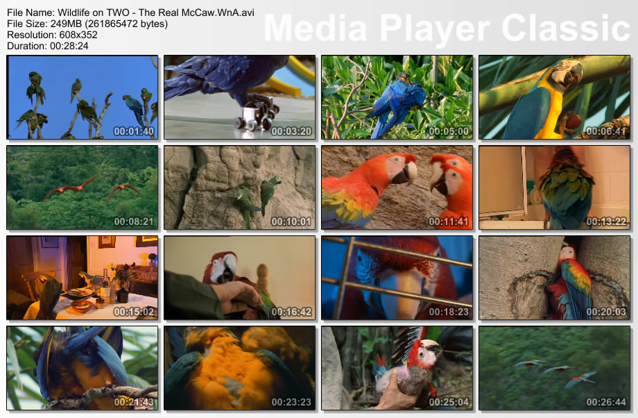 Image: Real-Macaw-Screen0.jpg