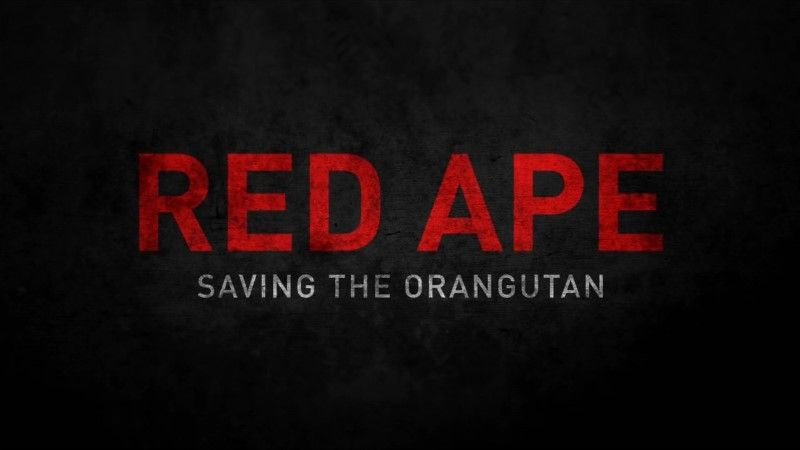Image: Red-Ape-Saving-the-Orangutan-Cover.jpg