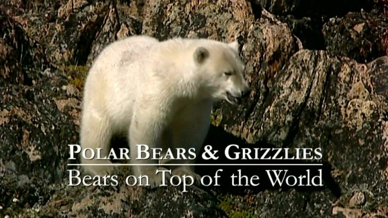 Image: Bears-on-Top-of-the-World-Cover.jpg