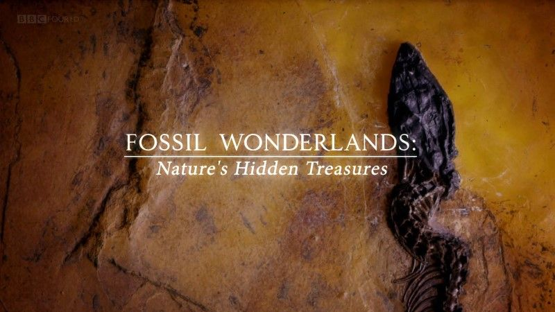 Image: Fossil-Wonderlands-Nature-s-Hidden-Treasures-BBC-Cover.jpg