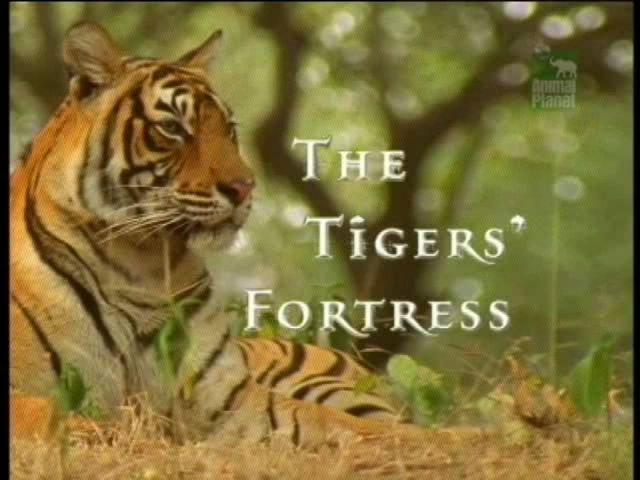Image: The-Tigers-Fortress-Cover.jpg