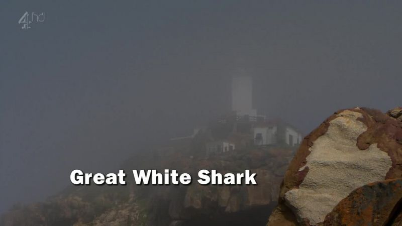 Image: Great-White-Shark-Ch4-Cover.jpg
