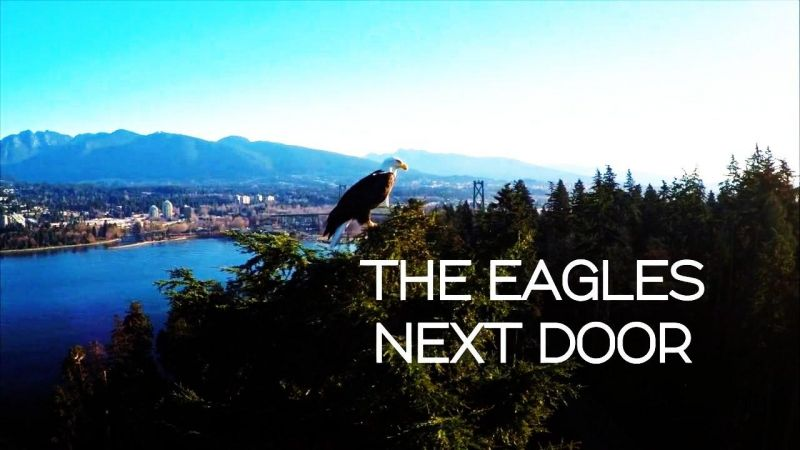 Image: The-Eagles-Next-Door-Cover.jpg