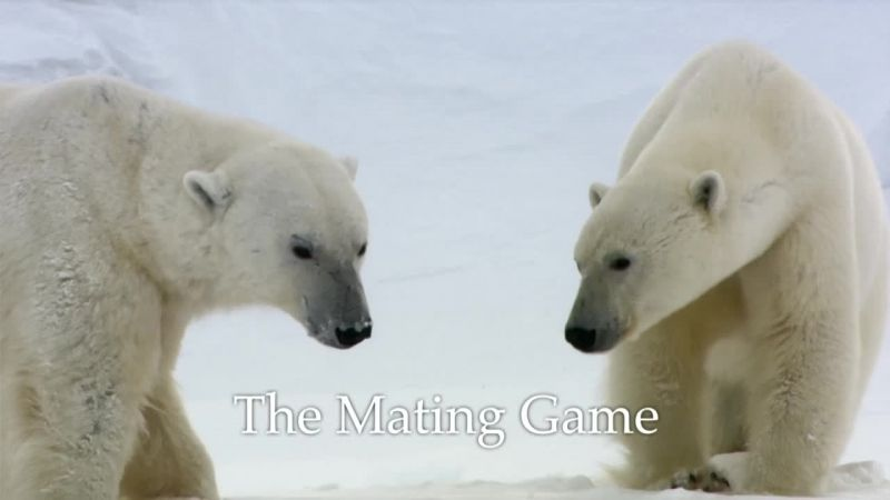 Image: The-Mating-Game-Cover.jpg