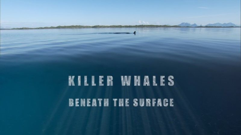 Image: Killer-Whales-Beneath-the-Surface-BBC-1080p-Cover.jpg