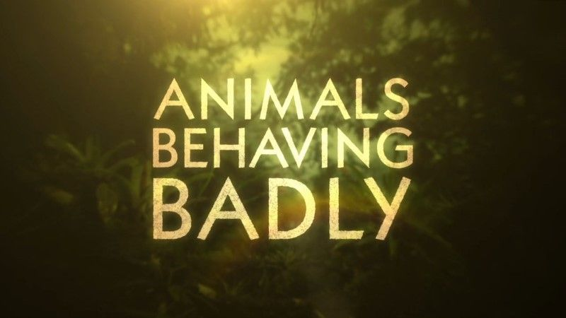 Image: Animals-Behaving-Badly-Series-1-Cover.jpg