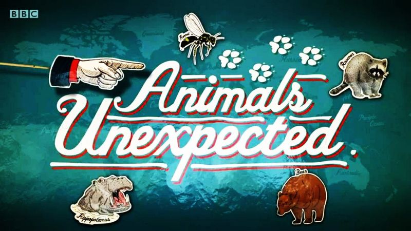 Image: Animals-Unexpected-Cover.jpg