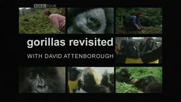 Image: Gorillas-Revisited-with-David-Attenborough-Cover.jpg