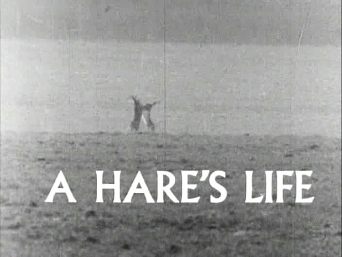 Image: A-Hare-s-Life-Cover.jpg