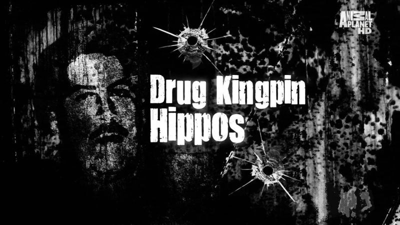 Image: Drug-Kingpin-Hippos-Cover.jpg