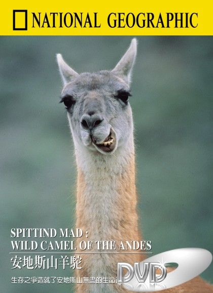 Image: Spitting-Mad-Wild-Camel-of-the-Andes-Cover.jpg