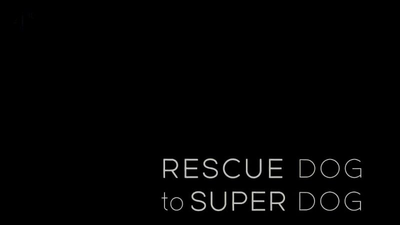 Image: Rescue-Dog-to-Super-Dog-Cover.jpg