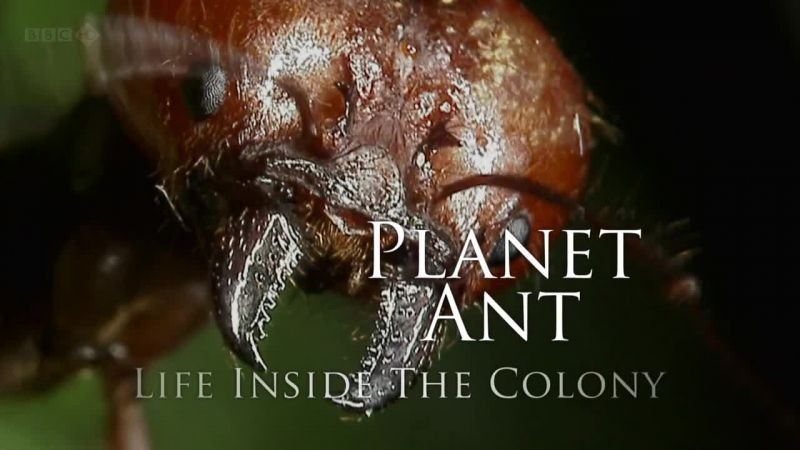 Image: Planet-Ant-Life-Inside-the-Colony-Cover.jpg