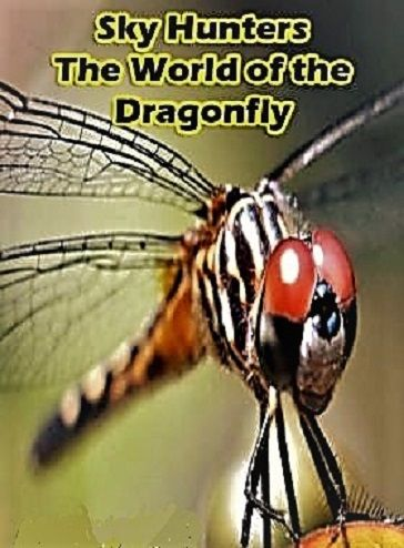 Image: Sky-Hunters-The-World-of-the-Dragonfly-Cover.jpg
