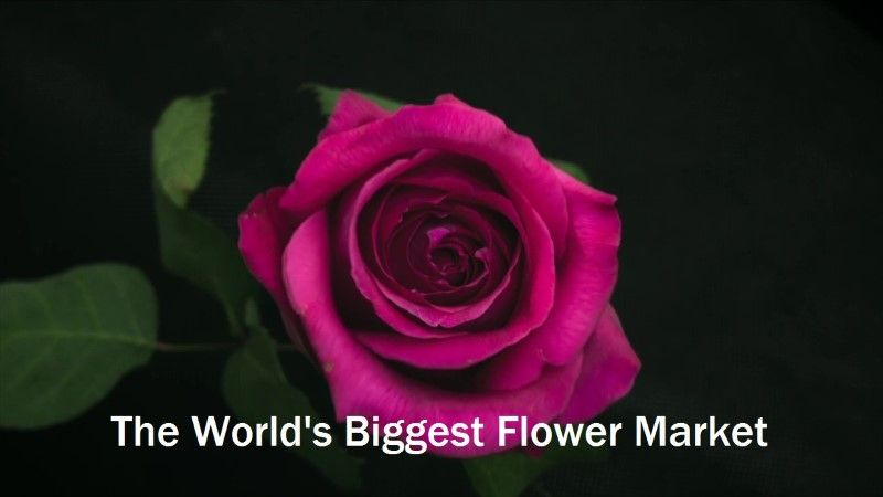 Image: The-World-s-Biggest-Flower-Market-Cover.jpg