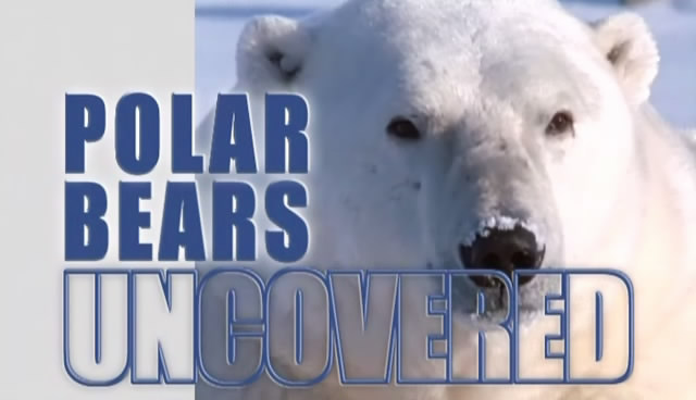 Image:Polar-Bears-Uncovered-Cover.jpg
