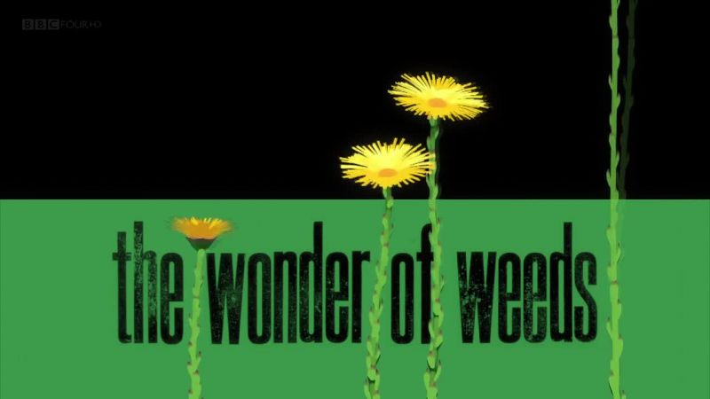 Image: The-Wonder-of-Weeds-BBC-Cover.jpg